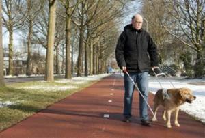 Man met blindengeleidehond en -stok